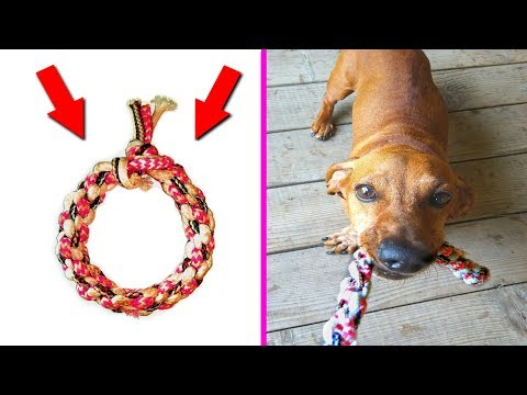 DIY- toy for dogs from old laces   crafts for pets    DIY kids crafts and games