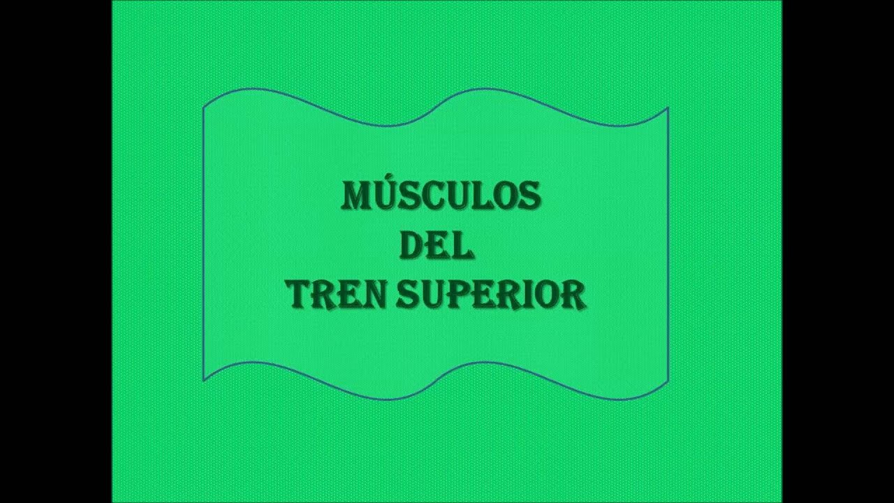 musculos del tren superior - YouTube