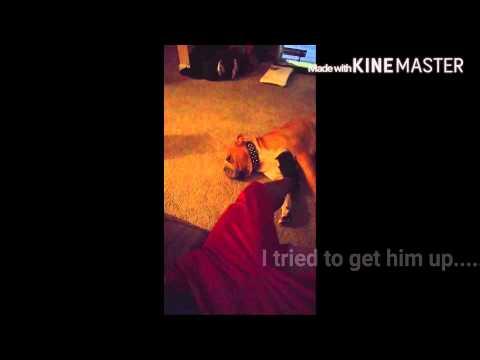 The Procrastinator Movie!!!!! My trip Home....