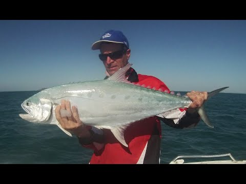 Brassy Trevally & Queenfish On Maribou Jigs