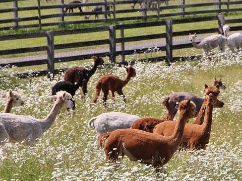 Rare Farm and Ranch in Tenino, Washington