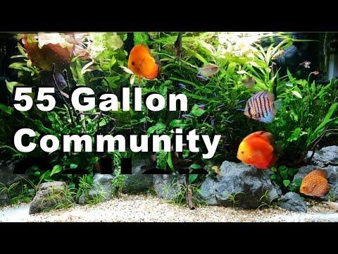 55 Gallon Community Fish Tank   Discus   Plants   DIY co2