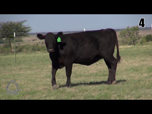 Pearcy Angus Ranch Lot 4