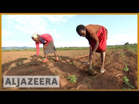 Kenyan farmers have high hopes for new African free trade