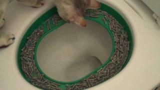 Cat toilet training, step3