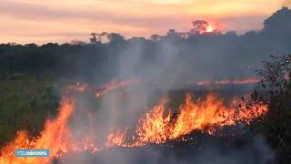 """Inheemse stammen Amazone slaan alarm: """"Dit zal allemaal verdwijnen"""""""