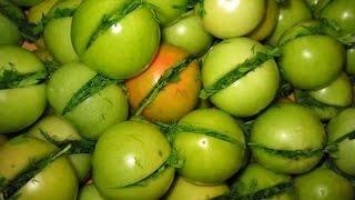 Помидоры моченые, квашеные, соленые - рецепт(Рецепт посола зеленых помидор: помидоры нашпиговать чесноком и зеленью, сложить в банку, залить рассолом,..., 2013-10-07T10:56:21.000Z)