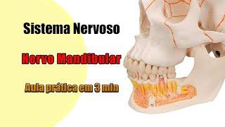 Cabeça pescoço nervosa e na lesão