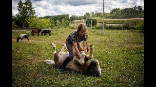 Пони-ферма где воспитывают шетлендских пони