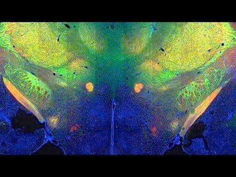 Richard Palmiter: 2011 Allen Institute for Brain Science Symposium