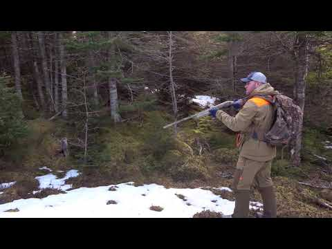 Newfoundland Rabbit Hunt 2019