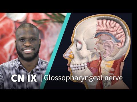 Glossopharyngeal, Vagus, Hypoglossal nerves examination - Cranial nerves 9, 10, 12.