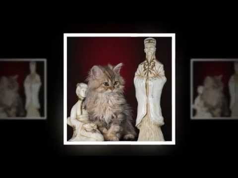 5 year Fair and Square   Selkirk Rex
