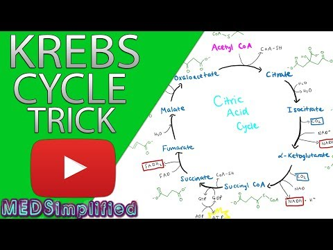 krebs-cylcle-trick-how-to-remember-krebs-cycle-forever!!