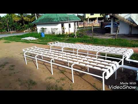 Nft Dwc Backyard Aquaponics System Youtube