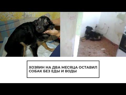 Хозяин на два месяца оставил собак без еды и воды