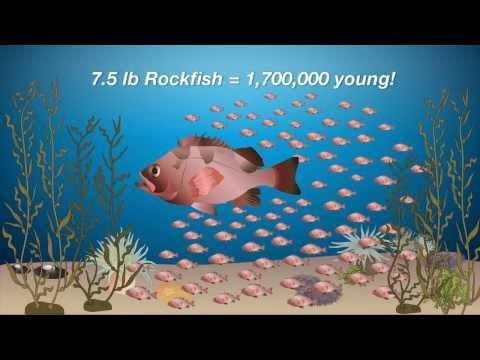 California's Marine Protected Areas - Aquarium of the Bay