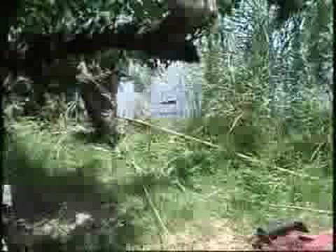 Venetian Isles Gator