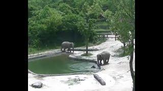 機靈大象: 搶救落水小象實錄 Heroic Elephants Rescue Drowning Calf from Pond | Seoul Grand Park