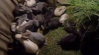 разведение кроликов в яме(, 2016-12-03T11:55:40.000Z)