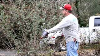 How To  Prune a  Buddleja Butterfly Bush