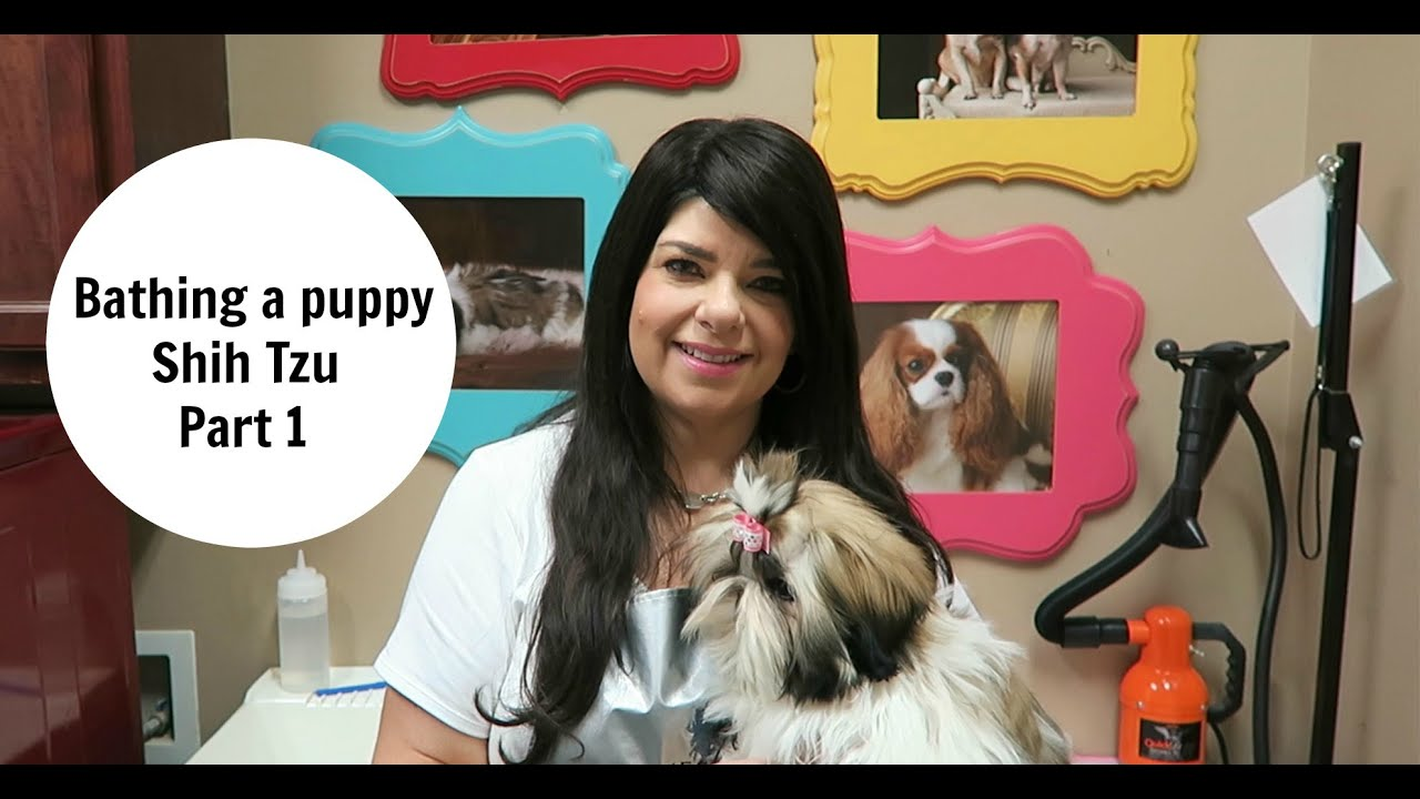 Giving A Shih Tzu Puppy A Bath Youtube
