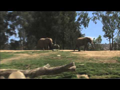 baby-elephant-named-emanti