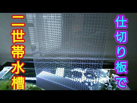 海水水槽#031仕切り板で二世帯水槽♪