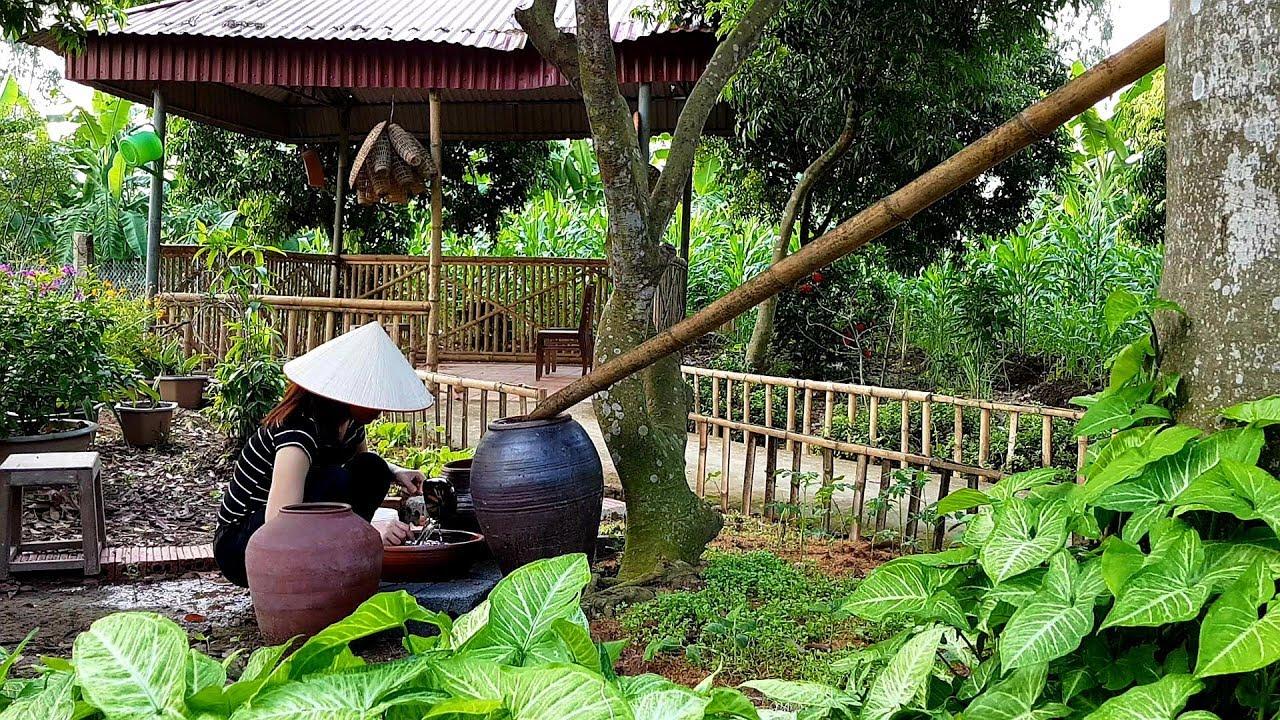 Món Ốc Nấu Chuối Đậu Ẩm Thực Làng Quê (Snail Cooked With Bananas)   Minh Anh