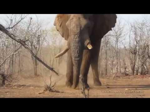 Stephen Powell & Steve Morvell Wildlife Artist Photographer Guided African Safari 2012