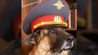 "Граф Шутц Хунд актёр сериала ""Возвращение Мухтара 2"" и ""Пёс""."