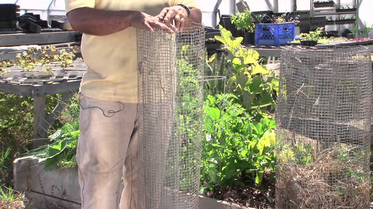 How To Keep Raccoons Out Of Vegetable Gardens : Vegetable Gardening 101    YouTube
