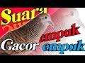 Suara Perkutut Lokal Gacor Dooorrrr Cocok Untuk Pikat  Mp3 - Mp4 Download