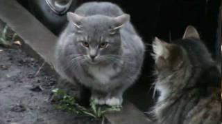 Санкт-Петербург. Пражская 15. Коты