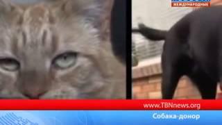 Собака стала донором для кота. ТБН - Россия