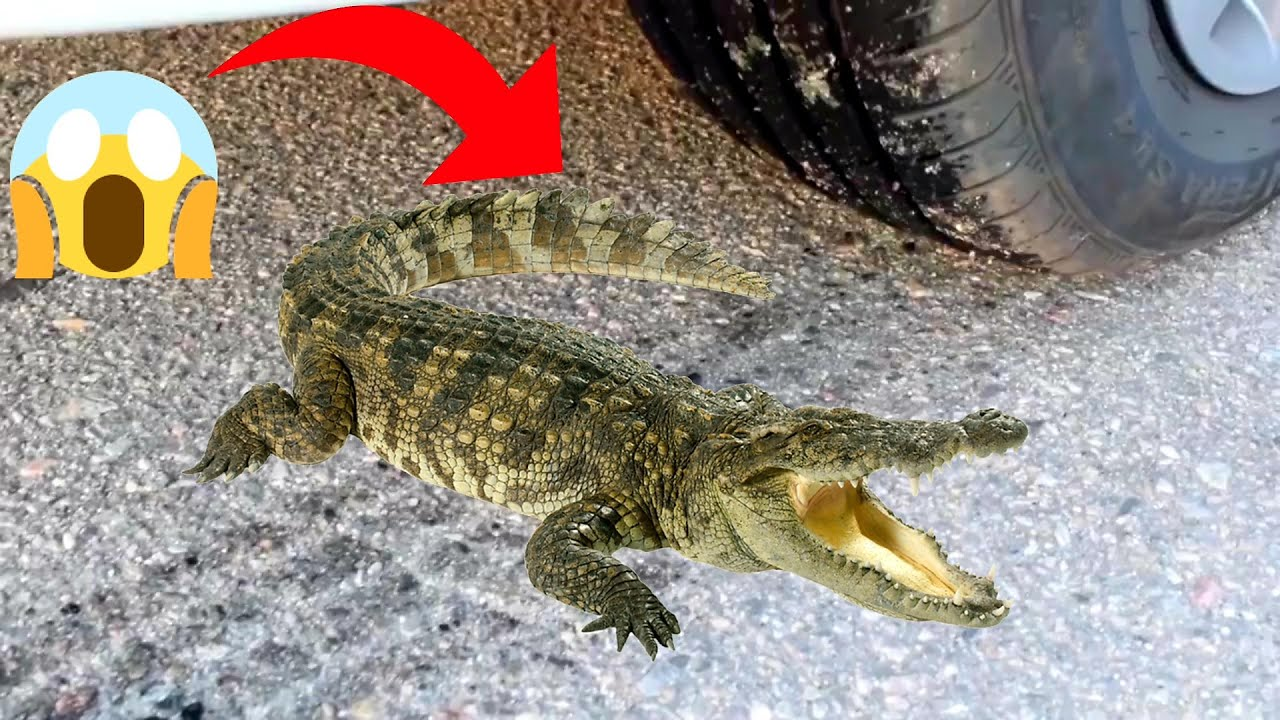 Download Crushing Crunchy & Soft Things by Car! - EXPERIMENT: CAR VS CROCODILE #23