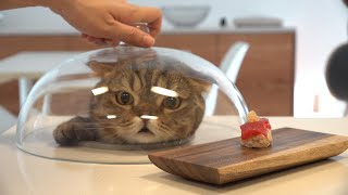 I Made Sushi for My Cats! (ENG SUB)