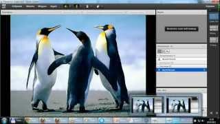 Обучающий урок по использованию Adobe Connect