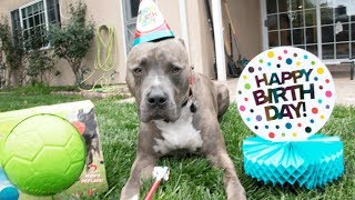 my-dog-s-birthday