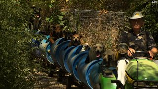 All Aboard The Dog Train! Rescues Go For A Ride