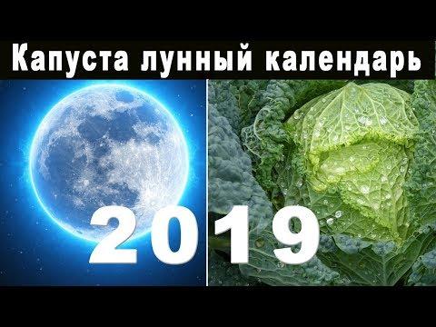 Вопрос: Кто придумал садить (огородничать) по лунному календарю?