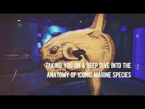 Sea Creatures Half Price Stray FM Vouchers