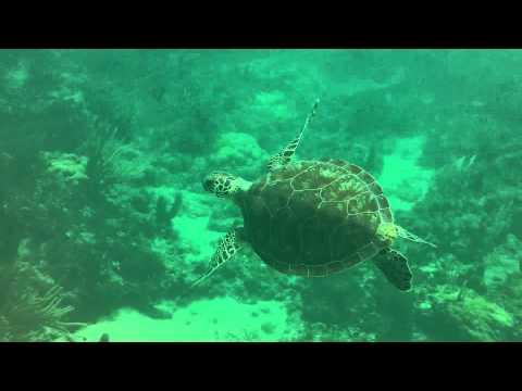 SnorkelTV episode 1 Saltwater Experience - Secret ...