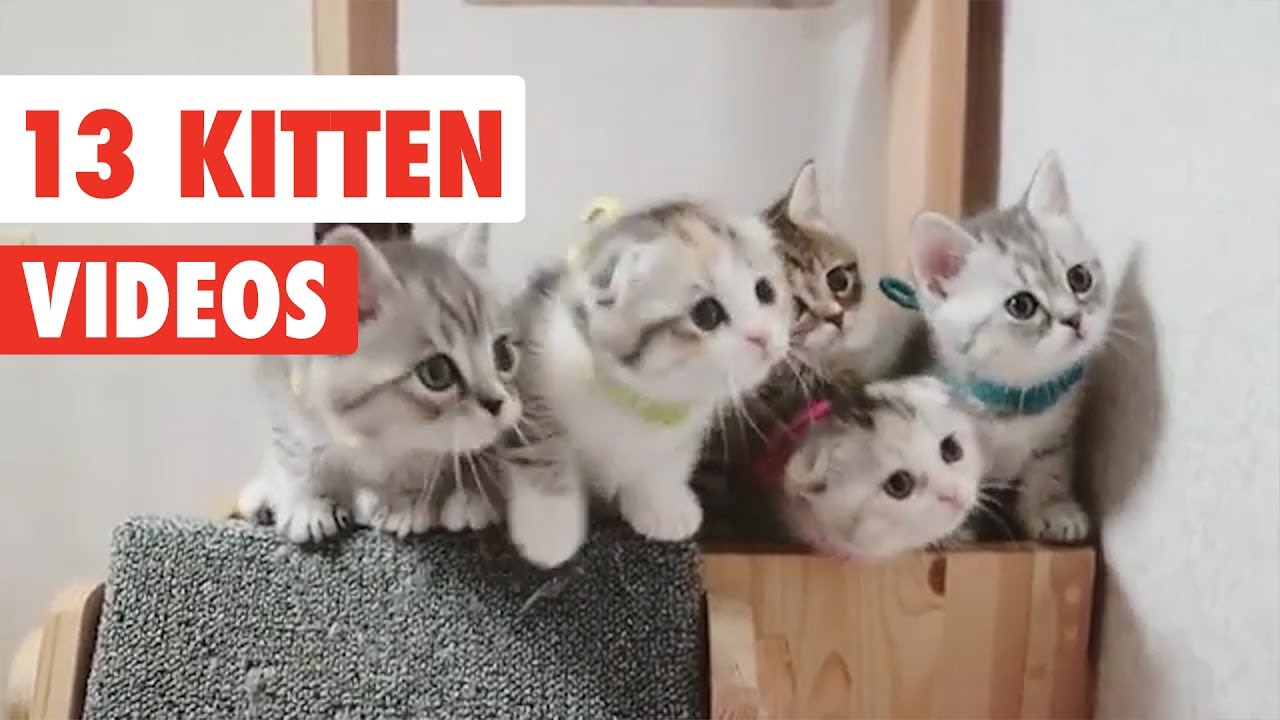 13 Funny Kittens Funny Cat Video Compilation 2017