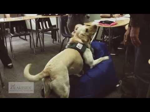 Lakeside's Facility Dogs