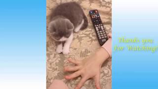 Cute Pets And Funny Animals Compilation #16   Pets Garden