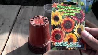 How to Grow Sunflower From Seeds | Different Kinds of Sunflower Seeds  (Urdu/hindi)