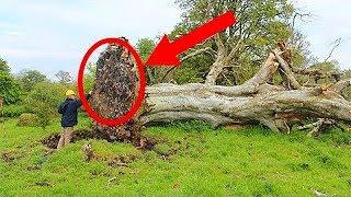 Cela a été caché aux gens du village pendant 1000 ans On l'a découvert après un ouragan