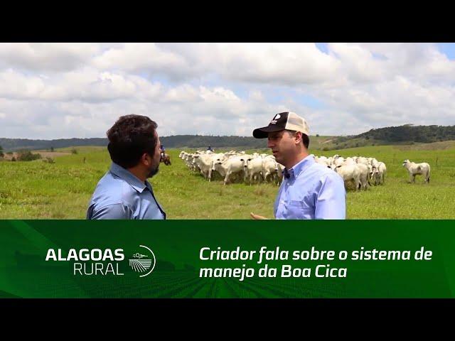 Criador fala sobre o sistema de manejo da Boa Cica, na cidade do Pilar