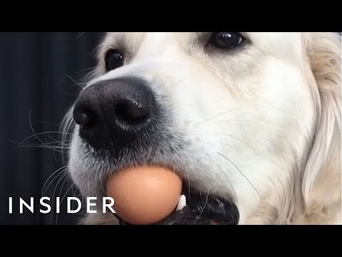 Dogs Try the Viral Egg Challenge